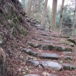 Stone steps in the forest