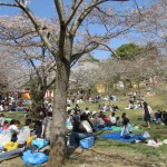 People enjoying the warm spring day and the blooming Sakura