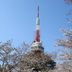 Sakura trees in front of the tower in Utsunomiya Tower